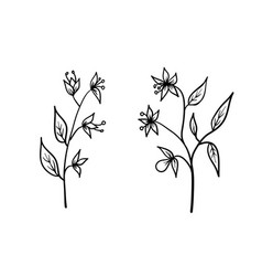 flowers hand drawn sketch floral art vector image