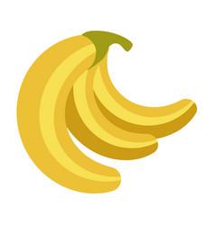 fresh ripe delicious organic bananas bunch vector image