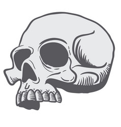 Skull 3 vector