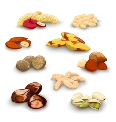Nuts Decorative Set vector image