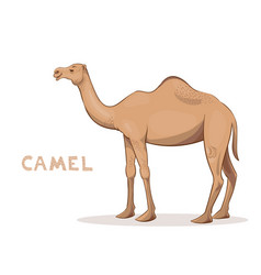 a cartoon camel isolated on a white background vector image