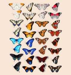 Collection butterflies vector