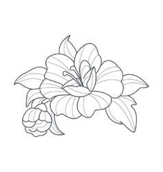 Dog Rose Flower Monochrome Drawing For Coloring vector image