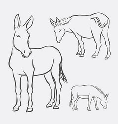 donkey pet animal sketch vector image