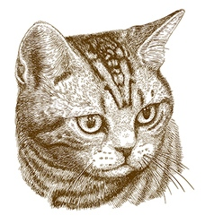 engraving cat head vector image