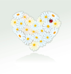 Heart is made of white daisies - Valentines day vector image