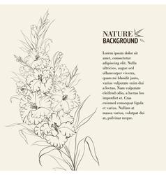 Irises flowers vector