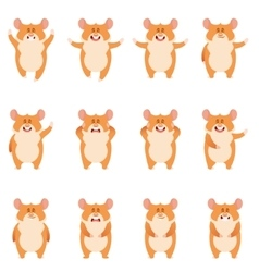 Set of flat hamster icons vector image