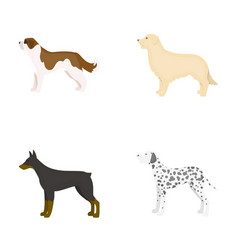 St bernard retrieverdoberman labrador dog vector
