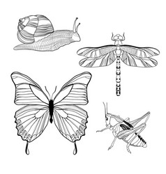 Hand drawn insects set vector
