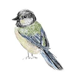 bird hand drawn vector image vector image