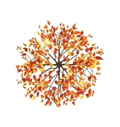 autumn tree top view vector image vector image