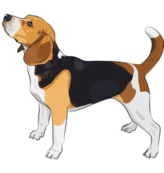 beagle dog royalty free vector image vectorstock rh vectorstock com dog vector art free dog victoria and albert museum