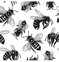 graphic seamless pattern realistic drawn honey vector image