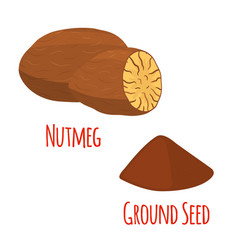 nutmeg fruit organic nut ground seed powder vector image