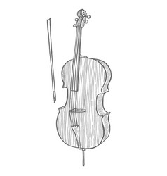 cello in hand-drawn style vector image