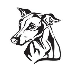 Decorative portrait dog italian greyhound vector