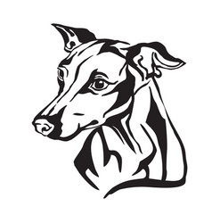 Decorative portrait of dog italian greyhound vector