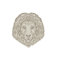 Lion big cat head mane drawing vector