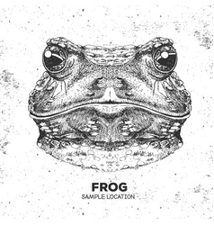 hipster animal frog hand drawing muzzle of frog vector image vector image