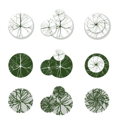 Trees for your own landscape desgns vector
