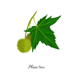 drawing branch plane tree vector image