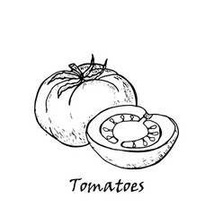hand drawn of tomatoes with a leaf vector image