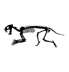 saber - toothed tiger hoplophoneus primaevus vector image