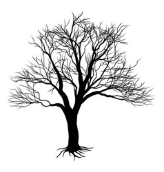 bare tree silhouette vector image