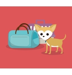 pet care center service icons vector image vector image