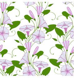 Floral elegant background convolvulus seamless vector