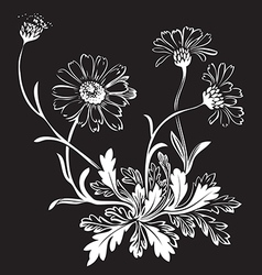 Hand drawn bouquet of chamomile flowers isolated vector