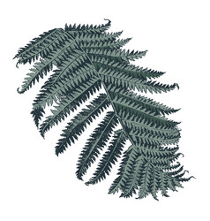hand drawn branch fern vector image