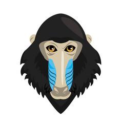 Mandrel monkey wild animal vector