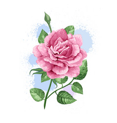 Rink rose on stem in watercolor style and splashes vector