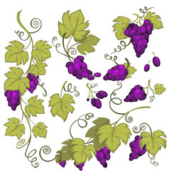 Winemaking grape bunches isolated icon vineyard vector