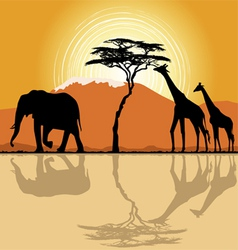 African landscape in sunset time vector image vector image