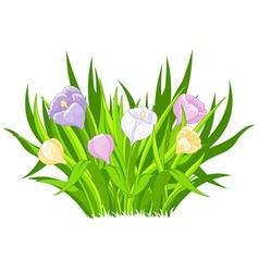 Crocus bouquet vector image