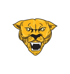 Angry Cougar Mountain Lion Head Drawing vector image