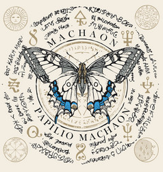 Papilio machaon butterfly with old magic symbols vector