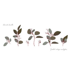 Seeded eucalyptus tree vintage branch elements set vector
