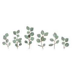 Set of eucalyptus branches isolated on white vector