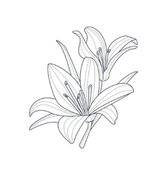 Two Lilies Flower Monochrome Drawing For Coloring vector