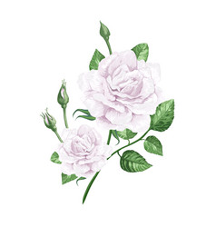 White rose on stem in watercolor style and vector