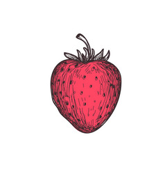 Ripe strawberry hand drawn isolated icon vector