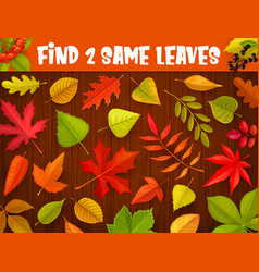 Kids maze game find two same autumnal leaves vector