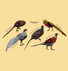 Pheasant collection hand draw sketch vector