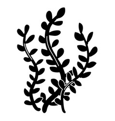sea weed isolated icon vector image