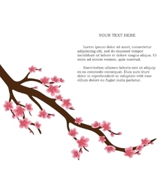 Japanese cherry tree isolated vector image