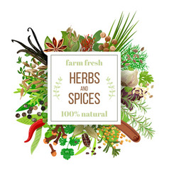 big set culinary herbs and spices under squire vector image